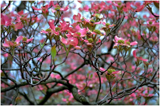 branch of pink blooms
