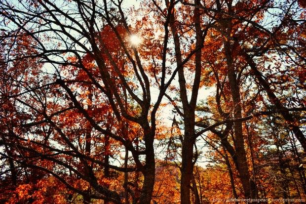 Gatlinburg Fall Trees | Life Is Sweet As A Peach