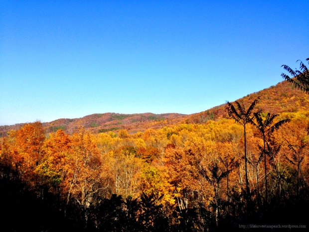 Golden Smoky Mountain Leaves | Life Is Sweet As A Peach