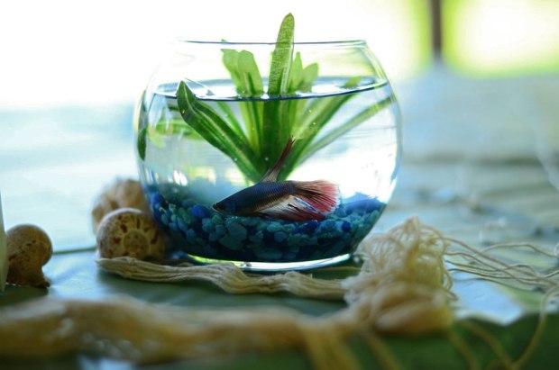 Beta-Fish-Centerpieces-Nautical-Baby-Shower