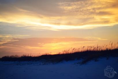 Destin Florida Dunes Sunset | Life Is Sweet As A Peach