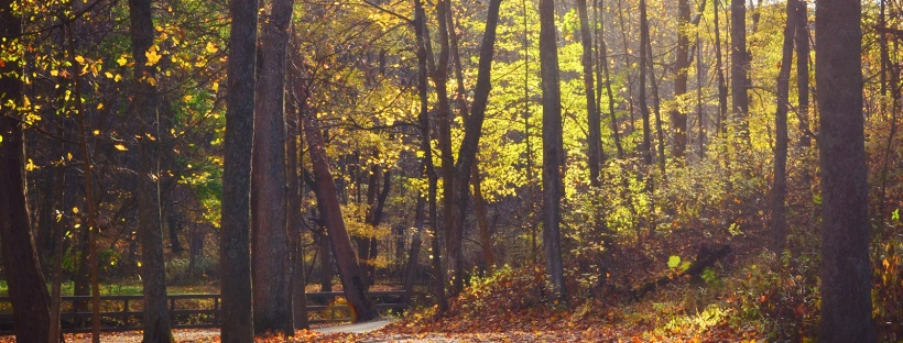 Mingo Creek County Park in Fall | Life Is Sweet As A Peach