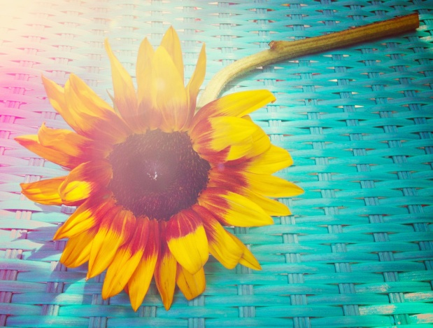 Summer Sunflower | Life Is Sweet As A Peach