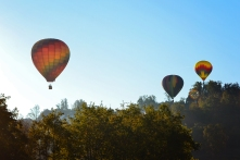 Balloons Over Morgantown 2016   Life Is Sweet As A Peach